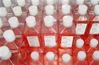 细菌总数显色培养基