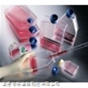 5-8F细胞;人鼻咽癌细胞