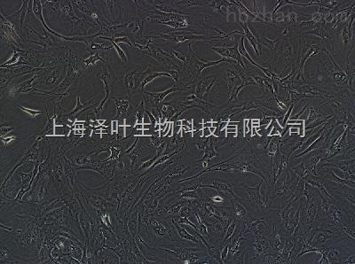 L2(大鼠肺泡上皮细胞)