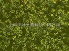 SV40 MES 13(小鼠肾小球系膜细胞)