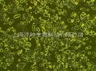 L5178Y TK+/- clone (3.7.2C)(小鼠淋巴瘤细胞)