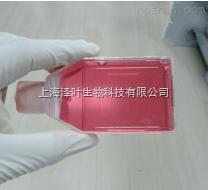 人膀胱上皮细胞