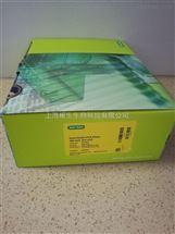 Bio-Rad伯乐Hard Shell 384孔全裙边PCR反应板HSP3801