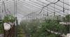 深圳龙岗蔬菜种植大喷浇水喷淋喷灌设备